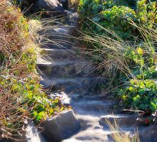 Magical Stairway by Lacey Kirsch