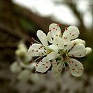 Spring Blossom by Mark Wilson