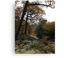 Ireland - Powerscourt River Canvas Print