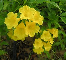 Yellow flowers by Lingesh