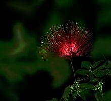 Multi Highlight Glow by Dennis Rubin IPA