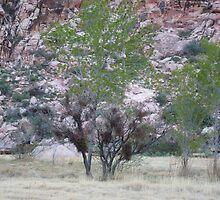 Desert Trees (Digital) by Snoboardnlife