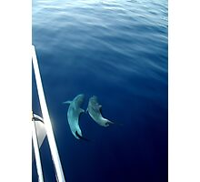 dolphins - adriatic, croatia Photographic Print