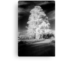 big tree little sky.......daniland Canvas Print