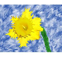 a daffy-dil Photographic Print