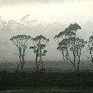 Misty Highlands by Anthony Davey