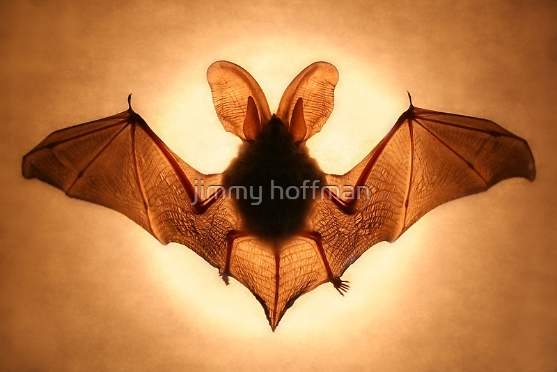 Bat by jimmy hoffman