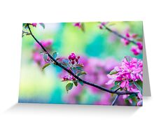 Pink apple blossom flowers Greeting Card
