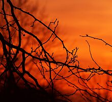 Bursting Sunset by Gaby Swanson  Photography