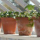 Strawberry Pots by ZELLEN
