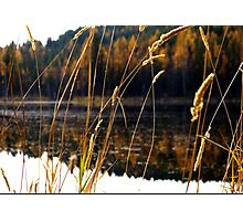 Picture Perfect Day Photographic Print