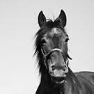 Equine by Katka Simcikova
