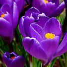 Springtime Whisper by Luis Correia