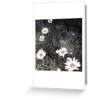 abstract daisies Greeting Card