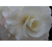 White Begonia Photographic Print
