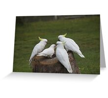 Just One of the Flock Greeting Card
