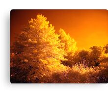Tree's On The Sun Canvas Print