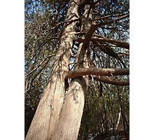 Now That's a Tree Hugger Photographic Print