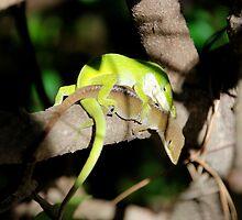 gecko love by MorganAshley