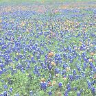 Washington on the Brazos Wildflowers by Tom Sieger