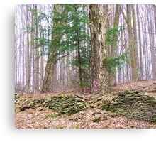 Old Property Line Canvas Print