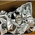 Cat In A Box by Mark Ross