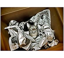 Cat In A Box Photographic Print