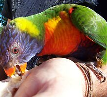 """""""Got him eating out of my hand"""" by Cathy Gilday"""