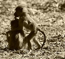 Two juvenile Chacma baboons by amjaywed