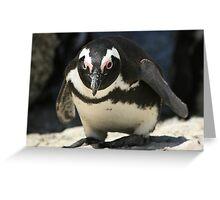 Curious Penguin Greeting Card