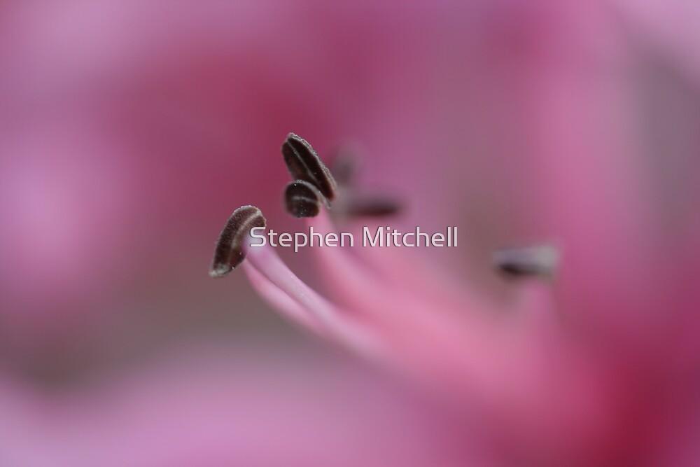 Mistique by Stephen Mitchell