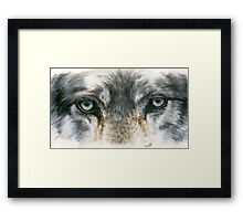 Eye-Catching Wolf Framed Print