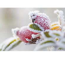 Frosty Berries Photographic Print