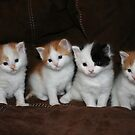 Kindred Kittens by Laura J Smith