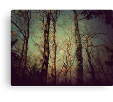 { enchanted forest } Canvas Print