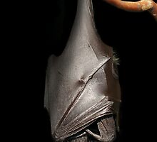 Bat on Black by ApeArt