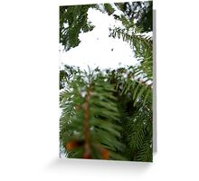 Spruce and snow Greeting Card