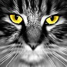 Cats eye by Sophie Watson