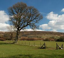 Another Farndale landscape by dougie1