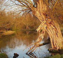 Flatford Tree (Wide) by Joe Ward