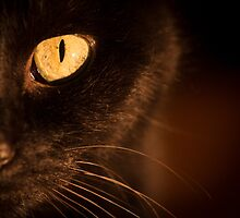 Portrait black cat by GemaIbarra
