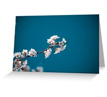 Blossoms of Spring Greeting Card