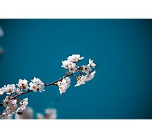 Blossoms of Spring Photographic Print