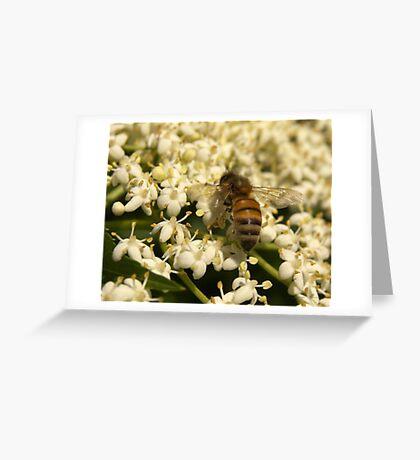 Elder Bee Greeting Card
