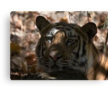 Dappled Tiger  Canvas Print