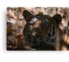 Dappled Tiger  Canvas Print