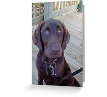 A Chocolate Lab Greeting Card