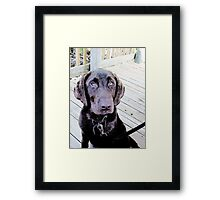 Chocolate Lab 2 Framed Print