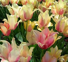 Tulips in the Sun by mwfoster