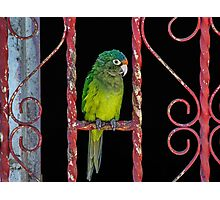 122514 flys the coup Photographic Print